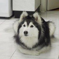 собака как кошка