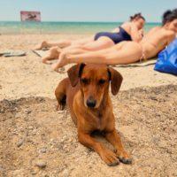 собака на пляже