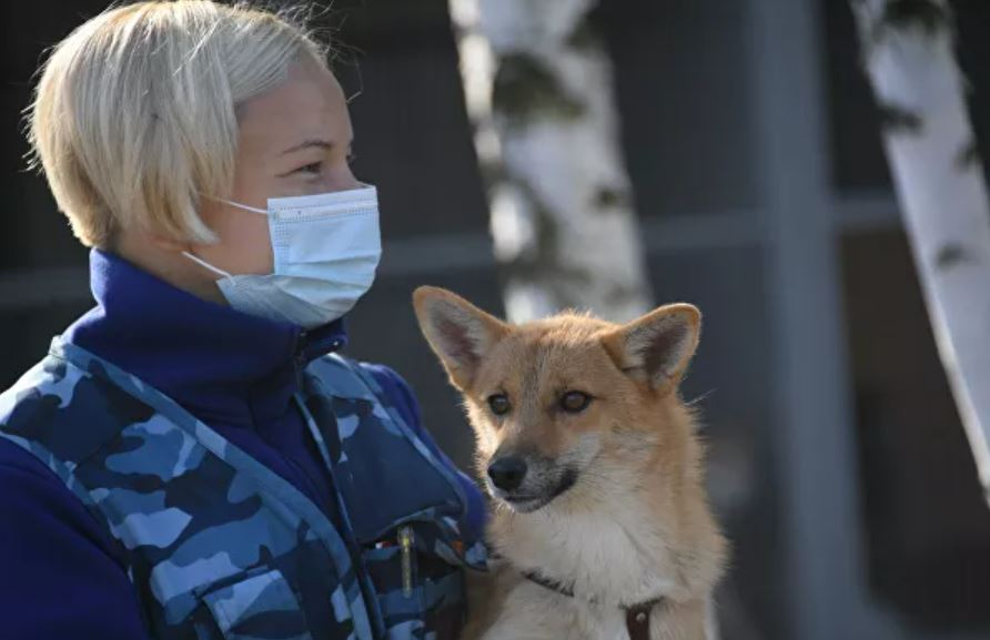 собаки шалайки коронавирус 4