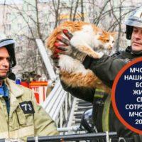 мчс спасает животных в москве