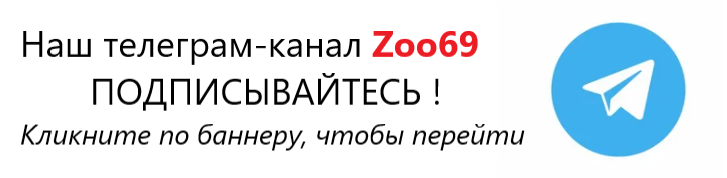 баннер телеграм канал zoo69