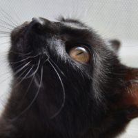 кот защищал хозяев Невельск