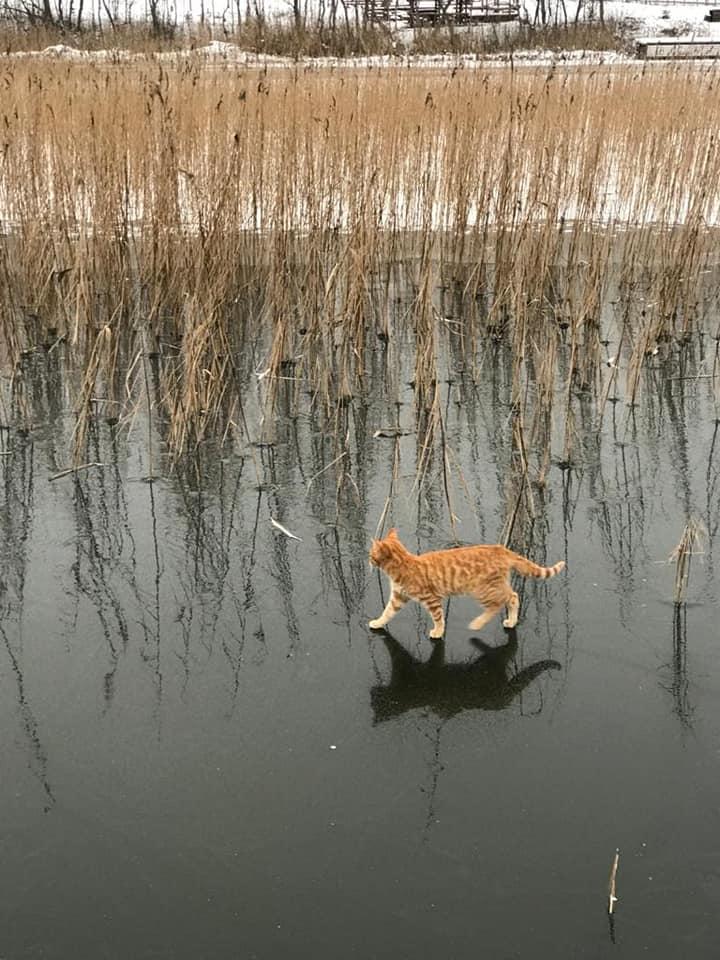 коты на льду
