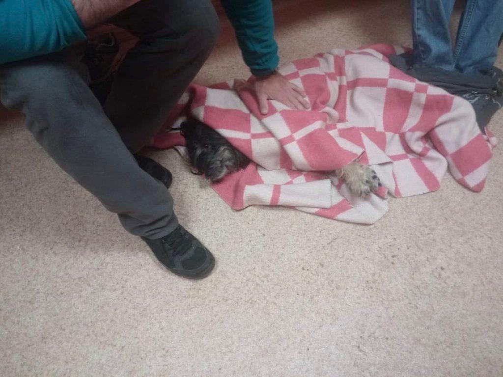 спасенная собака чубака бим 2