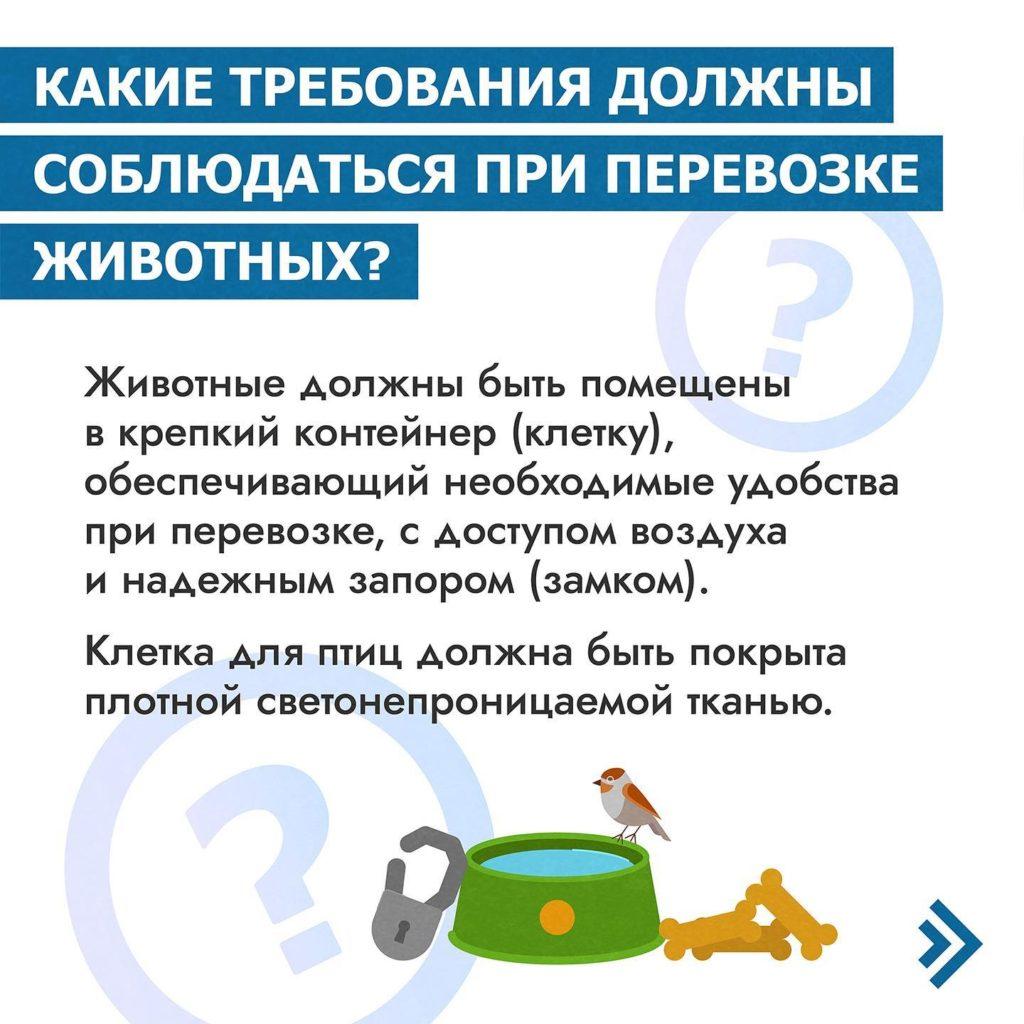 воздушная перевозка животных 5