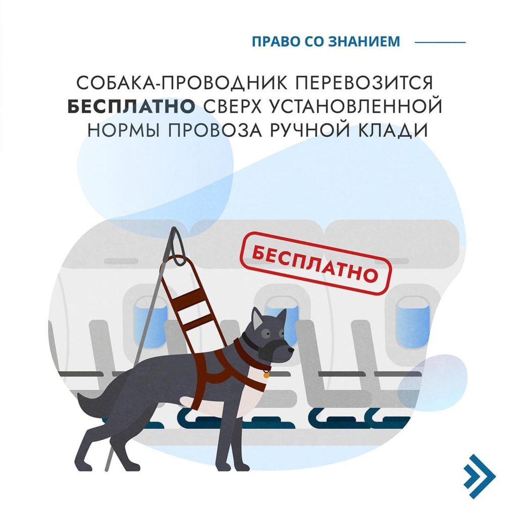 воздушная перевозка животных 7