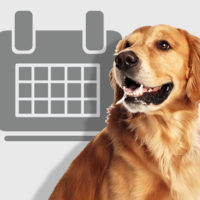собака с календарем