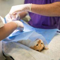 операция кошке