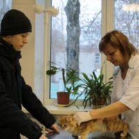 ветеринарный осмотр