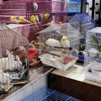 животные в зоомагазинах