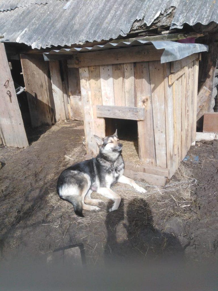 собака мама щенков