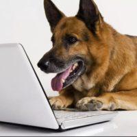 собака у ноутбука 2