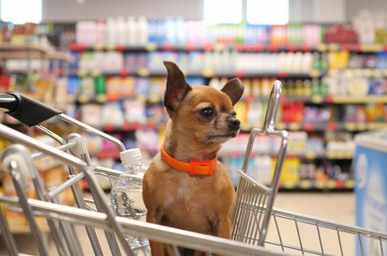 собака в продуктовой тележке
