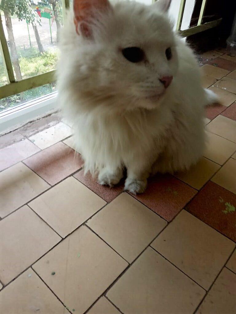 Белоснежная кошка 2
