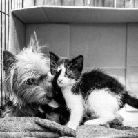 собака и котенок 1