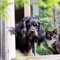 собака и кошка на даче 2